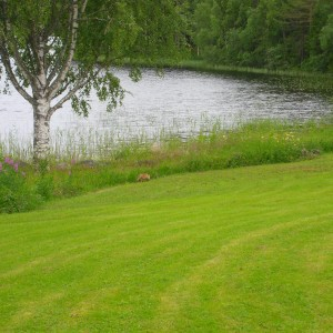 Op z'n gemak langs het hoge gras aan de waterkant aan het wandelen.